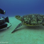 This Hawksbill Turtle was admiring his reflection in Mike's camera!