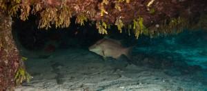 Crab Mountain, Exuma Cays, The Bahamas