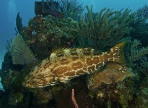 Danger Reef, Exuma Cays, The Bahamas