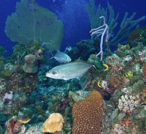 Danger Reef, Exuma Land and Sea Park, Bahamas