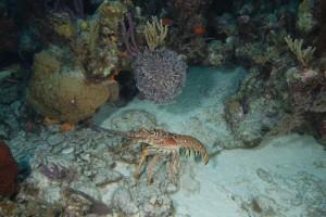 Lobster, No Lobster, Exumas, Bahamas