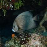 Amberjack Reef, Exuma Land and Sea Park, Bahamas