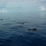 Exuma Sound, Bahamas