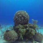 Barrel Sponge Threesome!